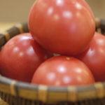いよいよ渥美の農家直送トマト販売します!